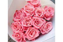 Roses ☆