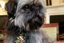 It's A Dog's Life / Bertie is Elizabeth Gage's gorgeous Shih Tzu who wears her jewels rather well!