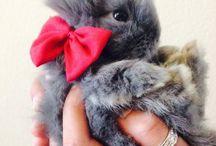 Bebek Tavşancıklar