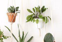 DIY pour Plantes