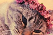 Cute Animals with Flowers