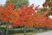 Garden - tree (träd)