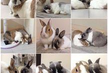 what noise do rabbits make?