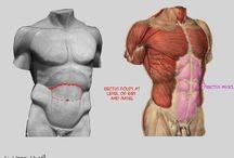 ref anatómicas