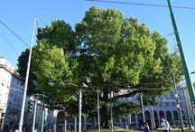 Eleggi l'Albero dell'anno 2016. I venti alberi che partecipano alle Ten Challenge