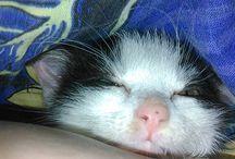 Cat Maja | Katze / Cat Maja