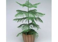 Send plants online in bangalore / Buy plants in bangalore,Plant nurseries in bangalore,Gift a plant online in bangalore,Buy plants online in bangalore,Send plants online in bangalore,Buy bonsai plants online in bangalore,Buy bonsai plants in bangalore,Bonsai plants for sale in bangalore,Bonsai plants online in bangalore,Order plants online in Bangalore