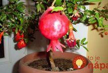 pestovanie rastliniek