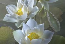 flores brancastodos os tipos perfeita