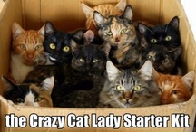 for when I turn in to a crazy cat lady / Crazy cat lady