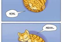 cats fun