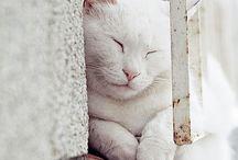 WHITE CATS...