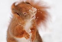 Inverno: Inspiração