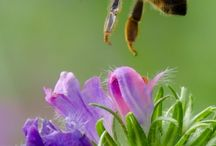 Bee Happy-Protect Our Pollinators!