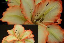 flores termoformadass