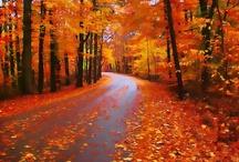 Fall / by Gwen Hafford