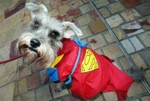 Animals Dressed as Superheroes / Animals dressed as superheroes.