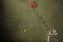 Photographs of plants and living things