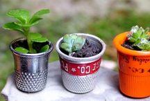 Miniatures gardens