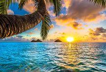 Moře a palmy...