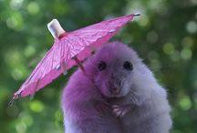 Pretty in Pink / by Traci LaRosa