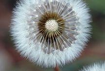 Flowers...Dandelions / Textile Art inspiration