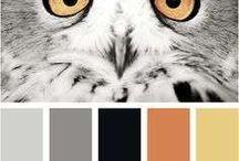 BB Zwart met Kleur