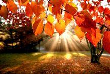 Краски осени в интерьере / Удержать лето не возможно, но краски осени помогут создать в интерьере теплую атмосферу, которая поможет адаптироваться к грядущим холодам.