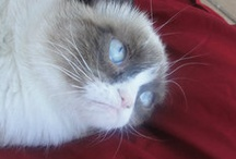 grumpy cat  / by Alex Skipper