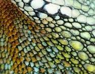 Her-Pattern-ofauna / Amphibians and Reptiles (Herpetofauna) come in all shapes and sizes but one of their most remarkable traits is their vibrant colours, patterns and textures.  Up close these can look more like works of modern art than natural wildlife!