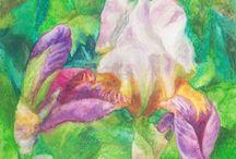 Irises drawings