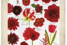 Flower Guide by Color