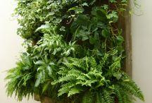 jardim do quarto vertical
