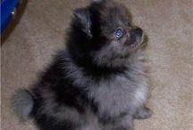 Puppy ❤️