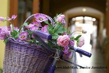 kvety / garden