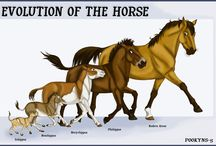 Prehistoric horses / Equine evolution, plus a few unrelated beasts that might have made good mounts. And cave art.