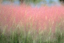 trawy/grass