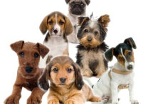 Dog Breeds / by Dennis Webace