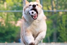 Pets Love Soccer, Too! / Animals that love the beautiful game!