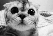 Cute kittens❤