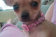 My Princess Thedosia