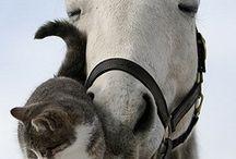 Gatitos y perritos / Que monos