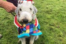 Redruth Fun Day 2017 / Pics from our fun dog show at the Funday