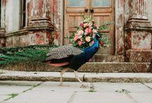 MWF | Modern Romantic Bride - Wedding Styled Shoot