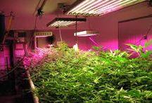 Led Grow Lights / LED Grow Lights - Grow your Plants with LED lighting