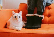 Fuzzy + Furry