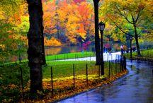 Central Park / by Lisa Flicker