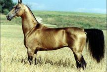Animaux الحيوانات الأليفة / Moi j'aime trop les animaux surtout les félins et les chevaux ♦♦♦♦♦