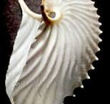 """gifts from the sea / Shells, driftwood, and other waterworn objects of art. My photos marked """"swordwhale.com"""", others pinned from around the web."""