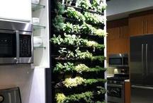 inside plants/garden